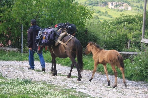 horse transfer