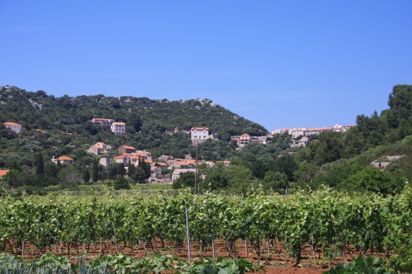 lastovo vineyards