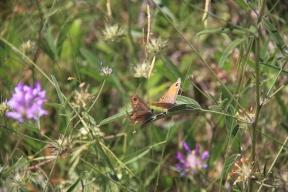 mlj Butterflies1