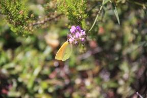 mlj butterflies2