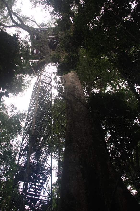 tree obs